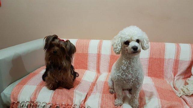 Lola y Umma, las perritas de Paula.