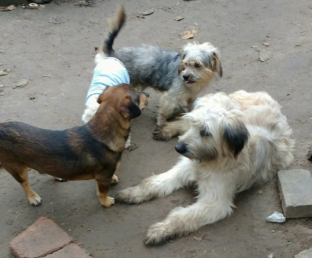 Cata, Teo, Nerón y Siro. Los perros de Liliana.