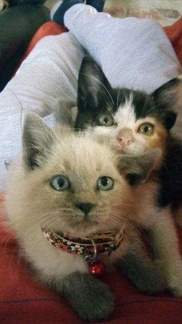 Los gatos de Marcee Umma.