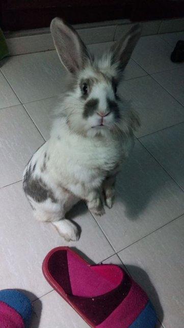 Wendy es el conejo de Belu.